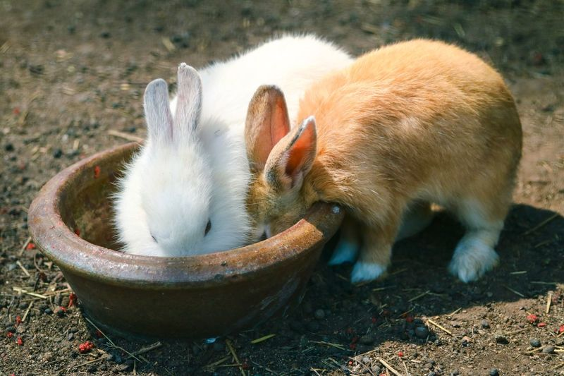 Two Rabbits Eating Outdoors