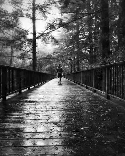 Santa Cruz, CA Walking Tree The Way Forward Outdoors Nature Blackandwhite Shootermag Fine Art Photography Bw_collection EyeEm Best Shots Weather Rain California Santa Cruz Nature_collection