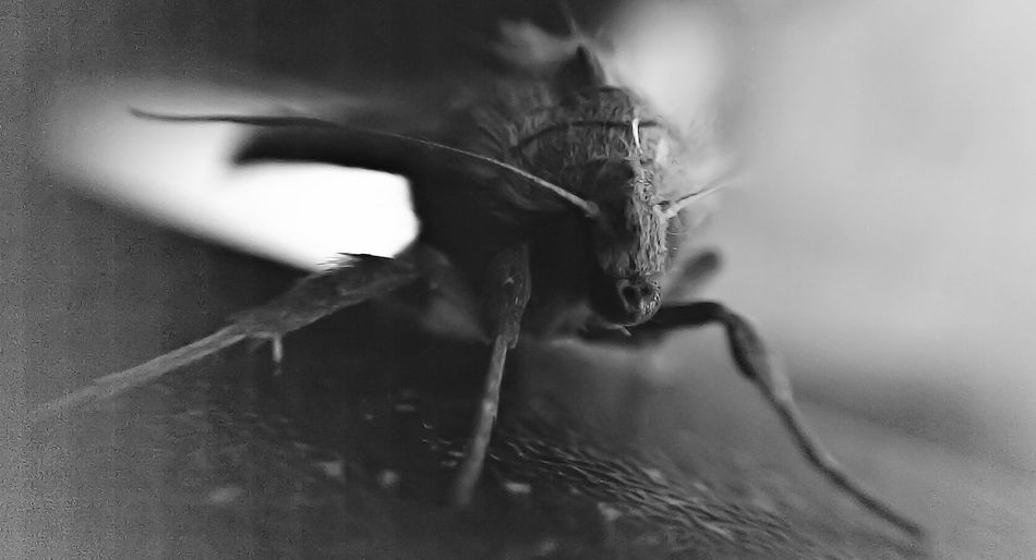 Hard Shot As My Camera Is Failing. 😖😖😖 Black Black And White Photography Loveall Close Up Black & White Black And White Collection  Mymate Nature Insect Earth Moth Black And White Loveit Love ♥ My View Life England