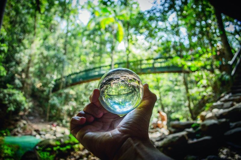 Close-Up Of Hand Holding Crystal Ball In Forest