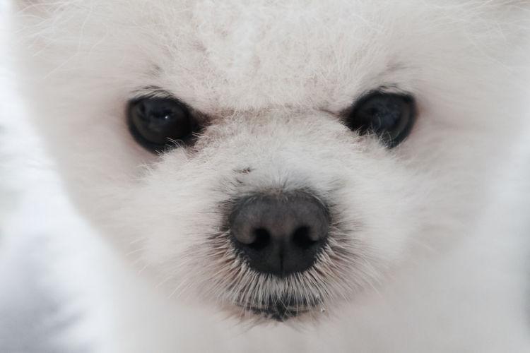 Pet Dog One