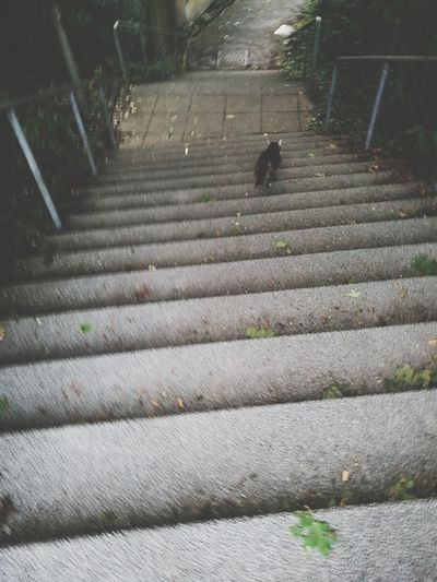 High angle view of cat on stairs