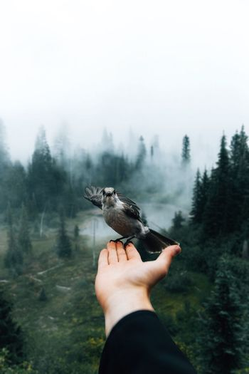 Cropped hand holding bird against sky in forest during foggy weather