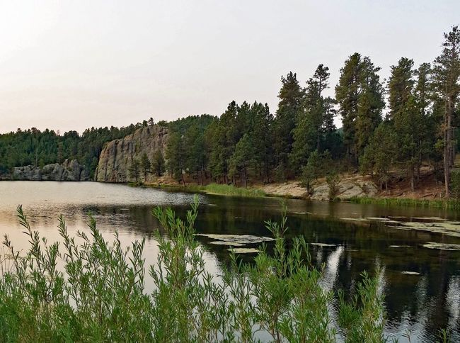 Early morning on shoreline at Legion Lake in Custer State Park in South Dakota Custer State Park Travel Destinations Shoreline Lake Morning Tree Lake Nature Reflection Growth Water Outdoors Tranquil Scene Beauty In Nature Scenics Tranquility No People Forest Landscape Day