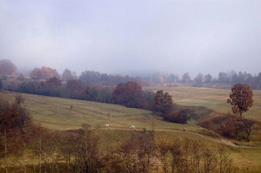 Morning Landscape Cows November Карпаты Karpathian карпати Церкiвна ноябрь пейзаж