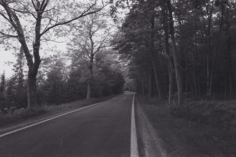 Adventure awaits Road Tree Film Black And White No Filter Summer2017 Film Photography Petoskey Michigan Forest Tree The Week On EyeEm Been There. Lost In The Landscape Black And White Friday An Eye For Travel Summer Exploratorium Focus On The Story The Great Outdoors - 2018 EyeEm Awards The Traveler - 2018 EyeEm Awards Summer Road Tripping