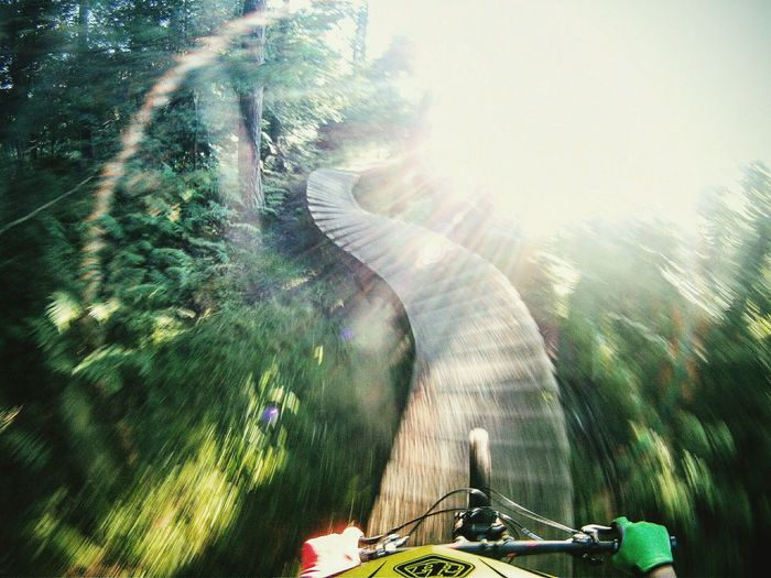 MTB MTB Biking Cycling Trail Mtblife Mtb Love Mtbpassion Sunlight Tree Nature Sunbeam Scotland Poc Growth No People Low Angle View Day Close-up Freshness Indoors  Beauty In Nature Double Exposure First Eyeem Photo