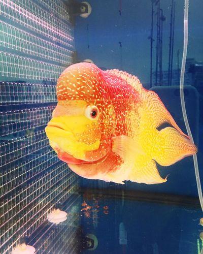 Fish One Animal