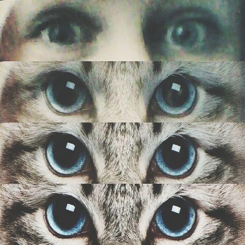 Meow Meow Fun! Blue Eyes