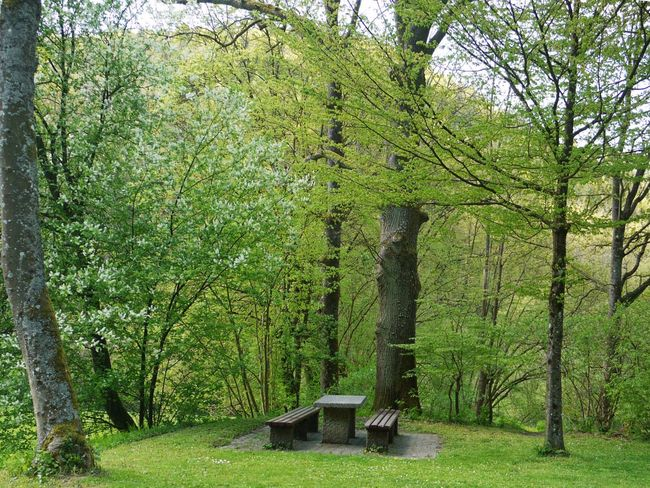 Fränkische Schweiz Beauty In Nature Cemetery Day Grass Green Color Growth Memories Nature Nature No People Outdoors Park Place Of Burial Plant Scenics Tombstone Tranquil Scene Tranquility Tree Tree Trunk