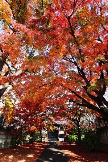 Autumn Autumn Colors Fall Beauty Autumn Leaves Fall Leaves Fall Colors Fall Eos6d Ef20mmf2.8
