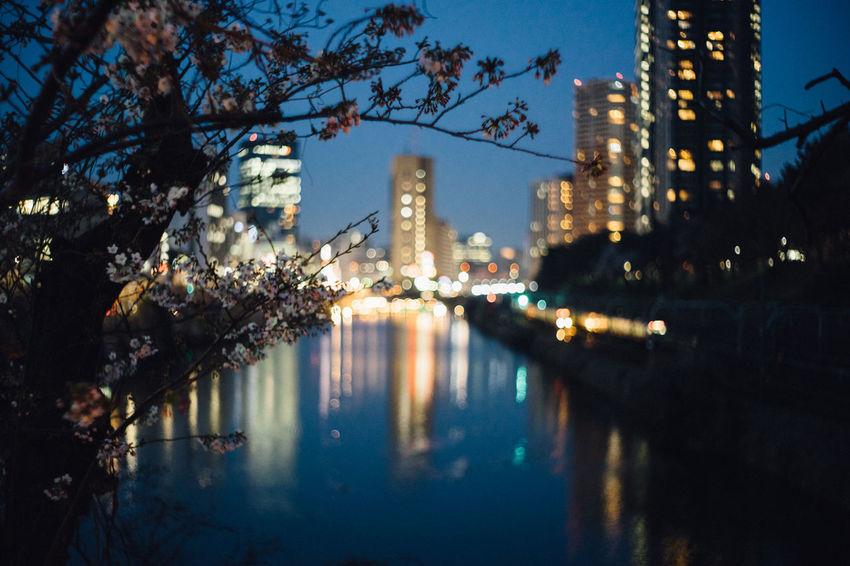 飯田橋 Architecture Building Exterior Built Structure City Cityscape Growth Illuminated Nature Night No People Outdoors Reflection River Sakura 2017 Sky Skyscraper Tokyo Tree Urban Skyline Water