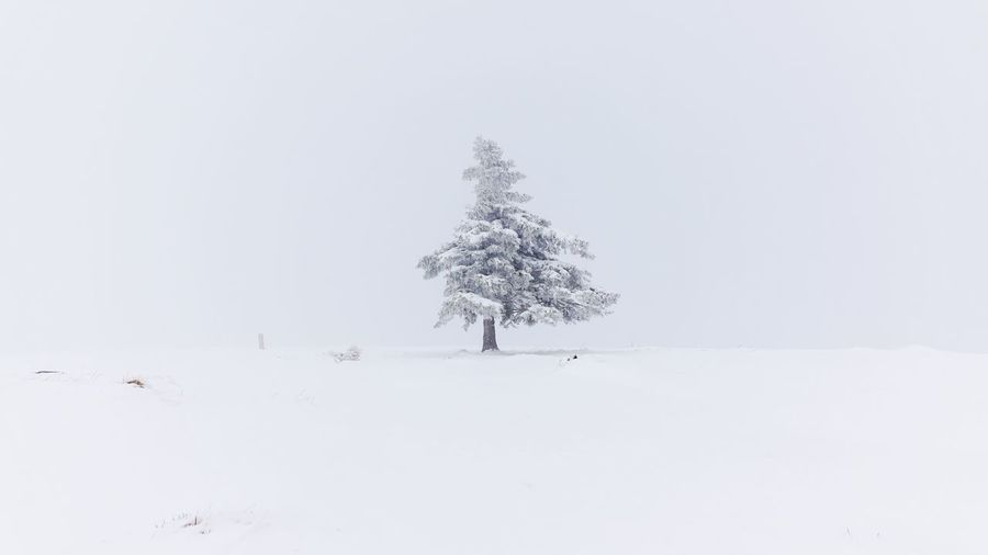 Trees on snow covered field against clear sky during winter