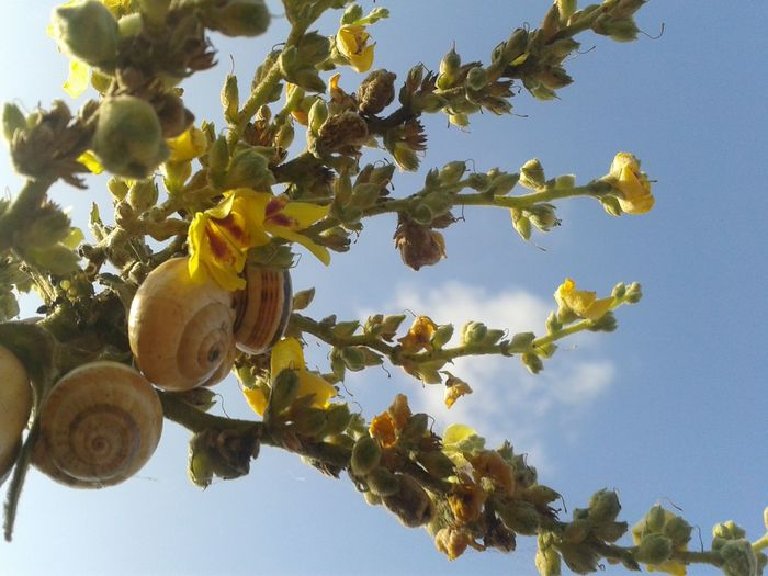 Tree Fruit Hanging Growth Branch Low Angle View Leaf Day Sky No People Nature Outdoors Sunlight Healthy Eating Clear Sky Blue Food Plant Part Freshness Close-up Snail🐌 Snail ❤ Snail Collection Snail Shell Sun