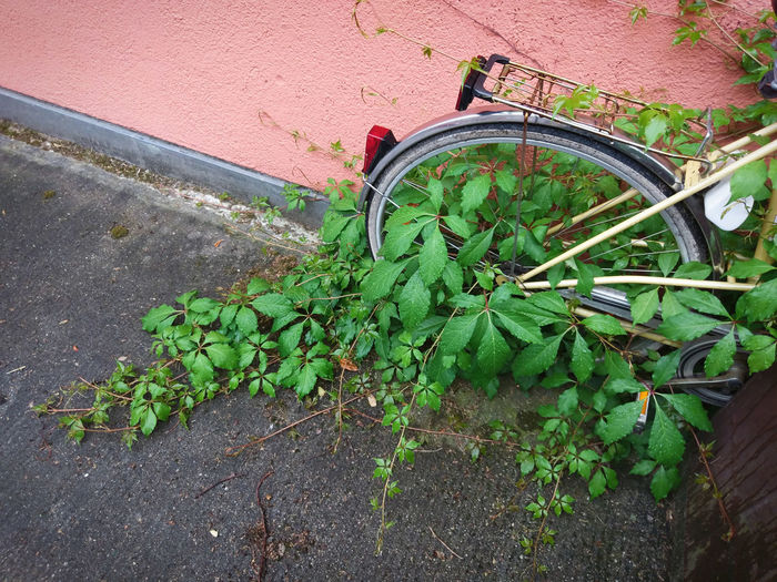 rear wheel of bike with plants grown over it City Forgotten Green Nature Pink Wheel Bicycle Bike Environment Freshness Green Color High Angle View Leaf No People Parking Pause Plant Plant Part Street Street Photography Transportation
