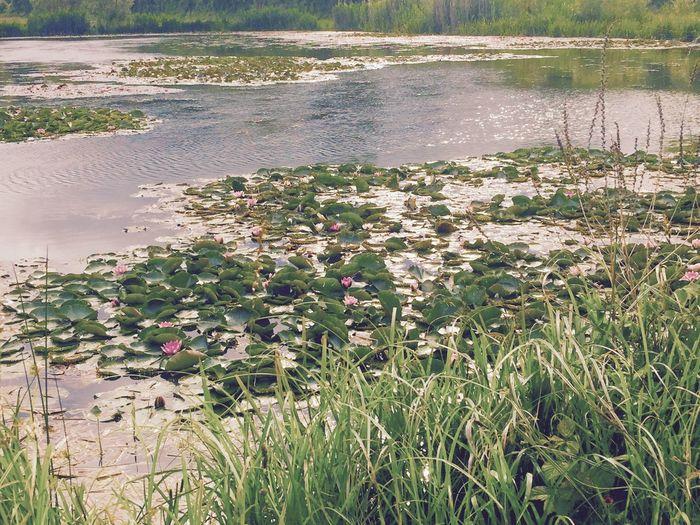 Lake Lake View Beautiful Nature Beatuful Day  Water Water Flowers