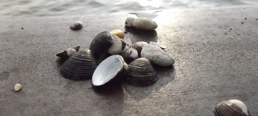 Sea Shells Lake Lake View Seashells, Sand And Water Grass Lake Michigan Grass Lake Nature The Great Outdoors - 2017 EyeEm Awards