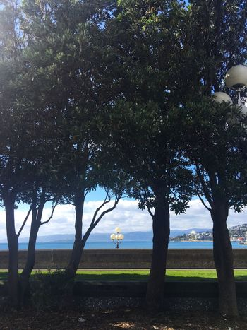 Lampposts framed by trees with the harbour beyond Lampposts Lights Harbour Trees Framed By Trees Green Grass