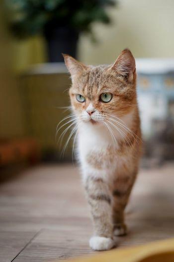 Cat human
