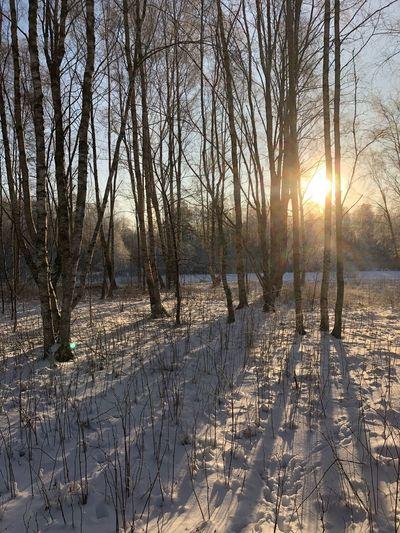 Winter Cold Temperature Snow Nature Bare Tree Sunlight Beauty In Nature