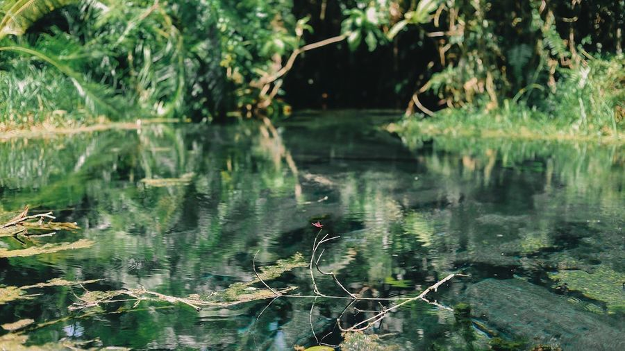 View of duck swimming in lake