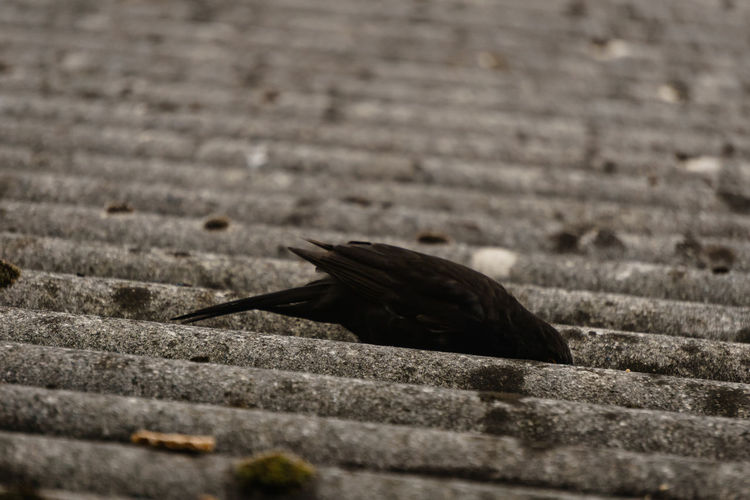 No People Day Close-up Nature One Animal Animal Themes Selective Focus Animals In The Wild Animal Animal Wildlife Footpath Vertebrate Bird Black Color Outdoors Side View Textured  Gastropod Zoology Wall EyeEm Best Shots EyeEm Nature Lover EyeEm Selects My Best Photo