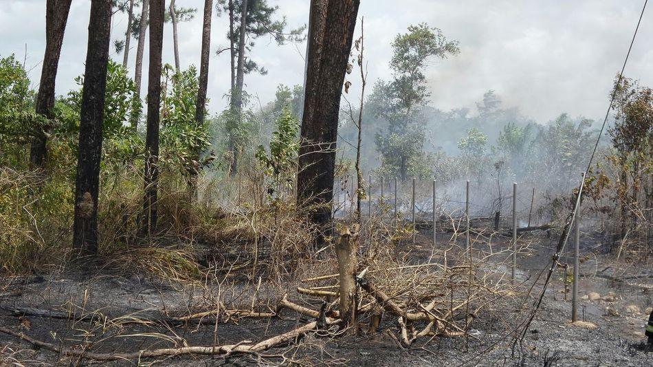 Smoke Trees Trinidad And Tobago Bush Fire No Edit/no Filter Samsung Kzoom Taking Photos