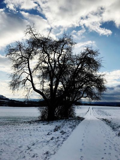 Germany winter 2017 Cold Temperature Snow