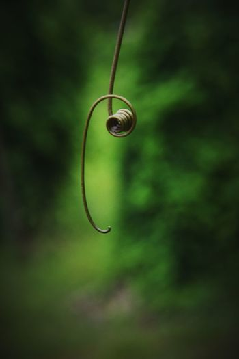 EyeEm Best Shots First Eyeem Photo No People Green Color Close-up Nature Drop Focus On Foreground Tendril Wet Selective Focus Hanging Plant Day Beauty In Nature Outdoors Growth Purity Water Twig Single Object Green
