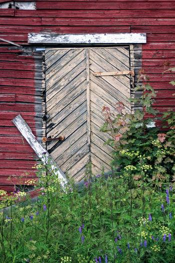Door of a derelict old warehouse in Hietakylä, Hamina Hamina Finland HIetakylä Street Photography Streetphotography Door Weather-beaten Plant Part Entrance Leaf Green Color Outdoors No People Dilapidated Derelict