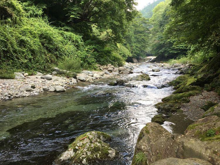 Enjoying Life Hi! 大自然 川 清流 River Enjoy 癒し 緑 Clear Stream Superb View River Swim Happy Forest 風景 Fishing 絶景 Japan Landscape Riverside