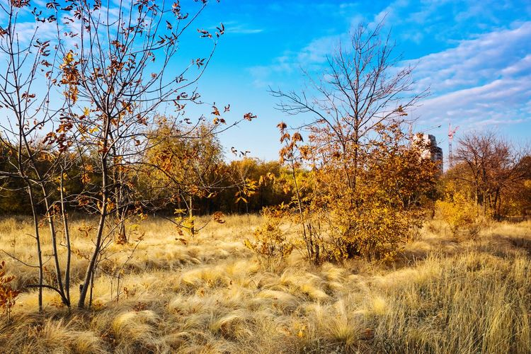 Sky Nature Cloud - Sky No People Outdoors Tree Close-up Scenics Freshness Day Autumn Beauty In Nature Sunset Orange Color Leaf Beautiful Grass Trees Beauty Blue Autumn Leaves