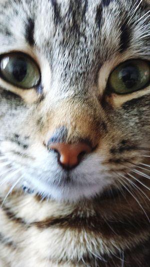 Otis Nature_collection Catsagram