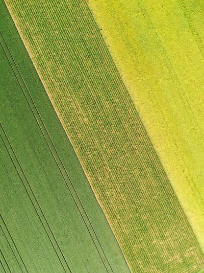 Full frame aerial photo of green and yellow colored agricultural fields.
