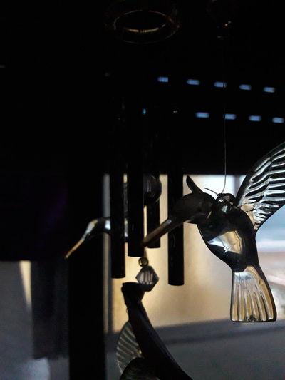 Colibrí J7 Neo Adorn Adornos Birds_collection Transparent Claroscuro Windows Home Bright EyeEmNewHere Visual Creativity