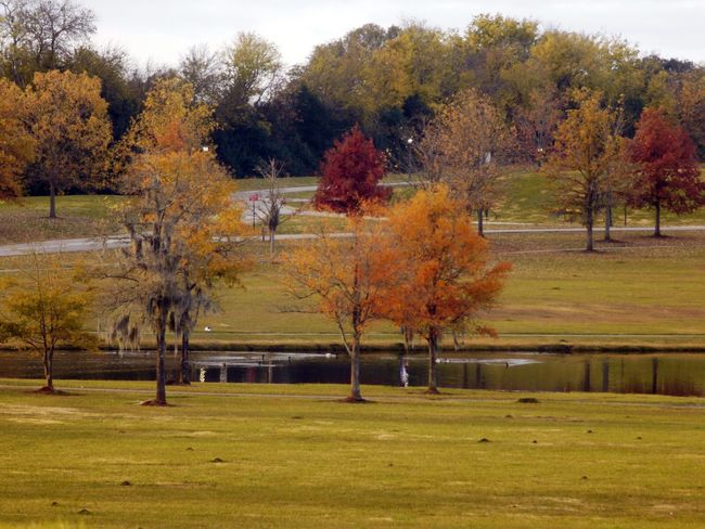 Tree Autumn Hockey Change Ice Hockey Leaf Grass Landscape Sky