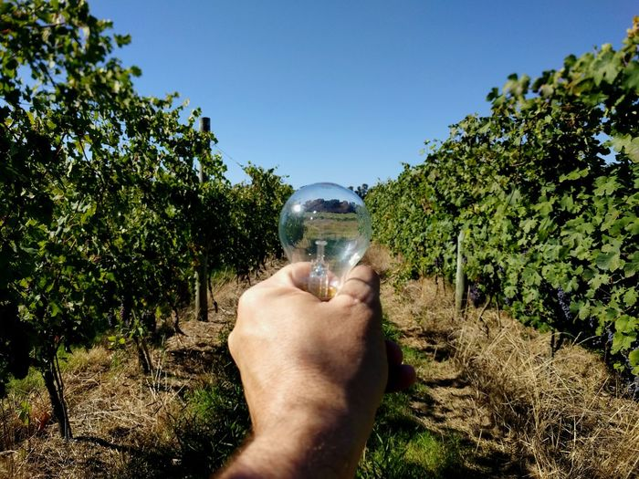 Close-up of hand holding light bulb in vineyard against clear blue sky