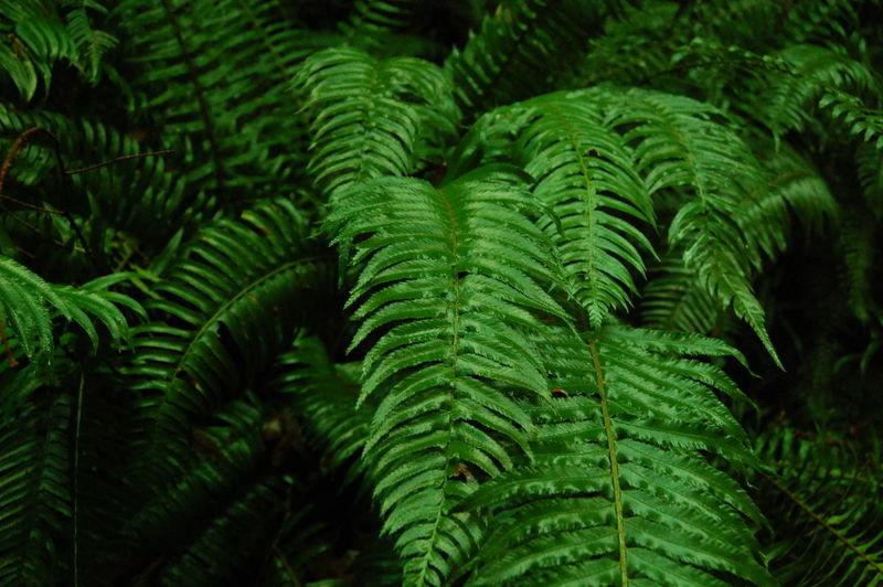 Full frame shot of pine tree