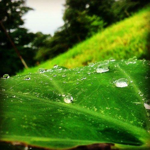 Water Drops Palampur Cskhpkv Monsoon2014 Himachalpradesh Ilovenature