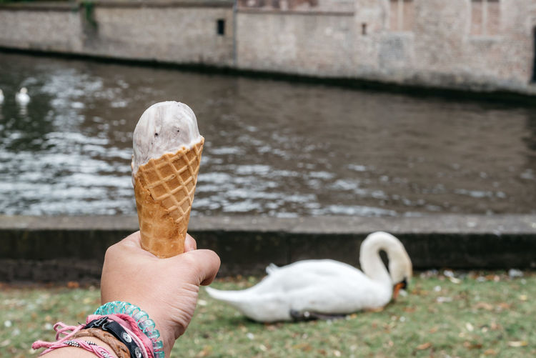 Cropped image of hand holding ice cream cone against swan by lake