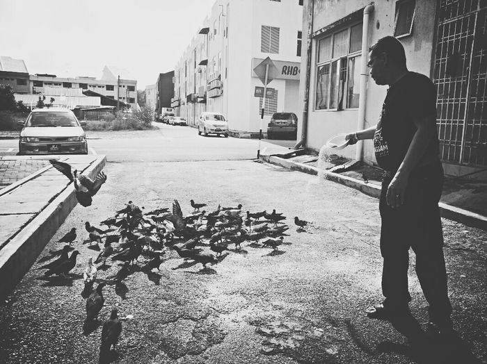 RePicture Masculinity Pigeons ATTACK Enjoying Life Feeding Pigeons Streetphotography