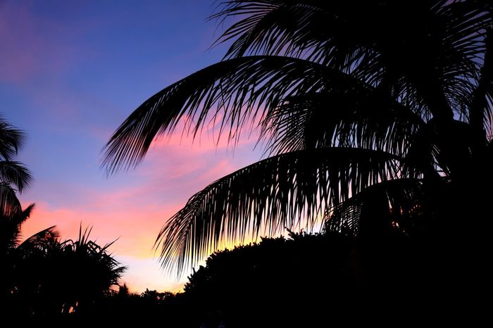 Sunset Silhouette Night Palm Tree No People Nature Outdoors Beauty In Nature Tree Area Cuba Collection Cuba Vacations Canon EOS 5D MarkIII Varadero, Cuba Varadero Beach - Cuba Beauty In Nature Sunset_collection Sunset Silhouettes Sunset In Cuba Travel The World Sky Canonphotography Cuba2017 Travel Photography Palm Tree