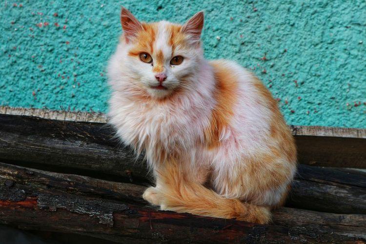 cat EyeEmNewHere Followme Likes Follow4follow Domestic Cat Pets Domestic Animals One Animal Feline Animal Themes Mammal Ginger Cat Day