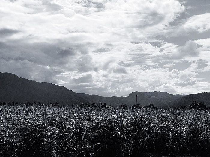 EyeEmNewHere Cloud - Sky Mountain Landscape Nature Sky No People Scenics Outdoors Beauty In Nature Growth Day Agriculture