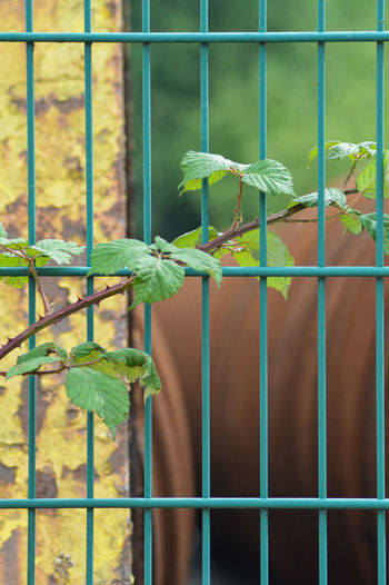 Close-up of plants on metal fence