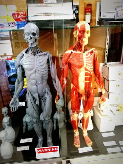 On an endcap display at Art Supply Warehouse the best Art Supplies store in Orange County Wandering Around Aimlessly Grey's Anatomy Skeleton Skulls Human Anatomy Artist The Artist's Way