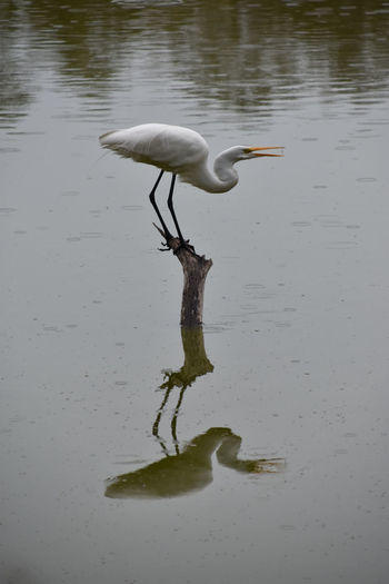 Bird on a lake