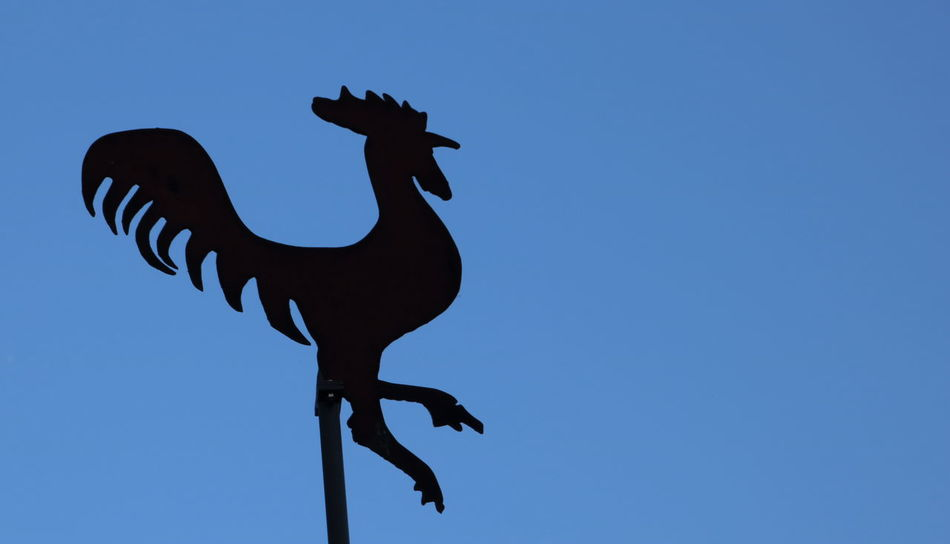 Animal Representation Blue Break The Mold Chicken - Bird Clear Sky Close-up Cockerel Copy Space Curve Day Low Angle View Navigational Compass No People Outdoors Roof Rooster Sculpture Silhouette Sky Statue Weather Vane Romagnamia