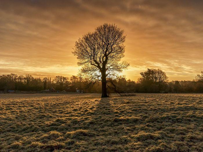 Bare tree on landscape against sunset sky
