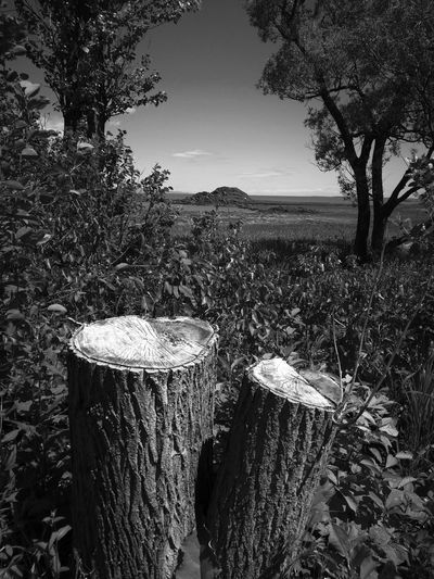 Alone.... Together.... Blackandwhite Blackandwhite Photography View Close-up Mypointofview Wood Viewpoint Island Togetherness Lonely Loneliness Peaceful View Peaceful Place Countryside Plant Life